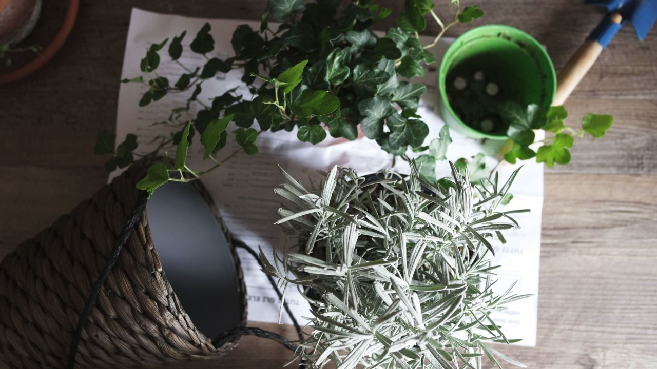 5 low maintenance houseplants that purify the air glamamom for Low maintenance indoor flowers