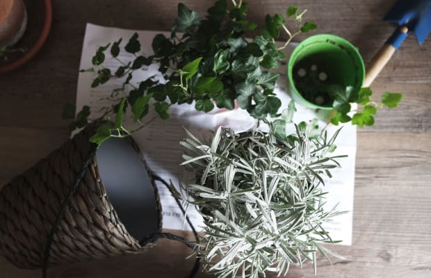 5 Low-Maintenance Houseplants That Purify the Air