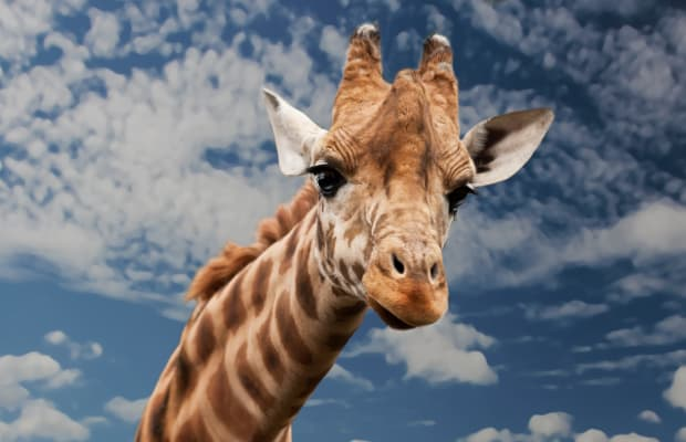 5 Ways April the Giraffe Can Relate to Expectant Moms Everywhere