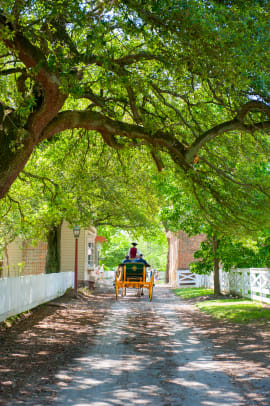 Carriage Ride_Colonial Williamsburg