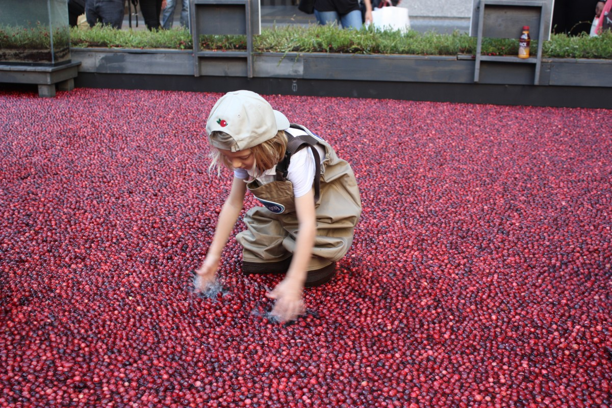 The Most Beautiful Harvest experience was designed to celebrate the beauty of the cranberry harvest – showcasing the fruit's journey from bog to bottle.