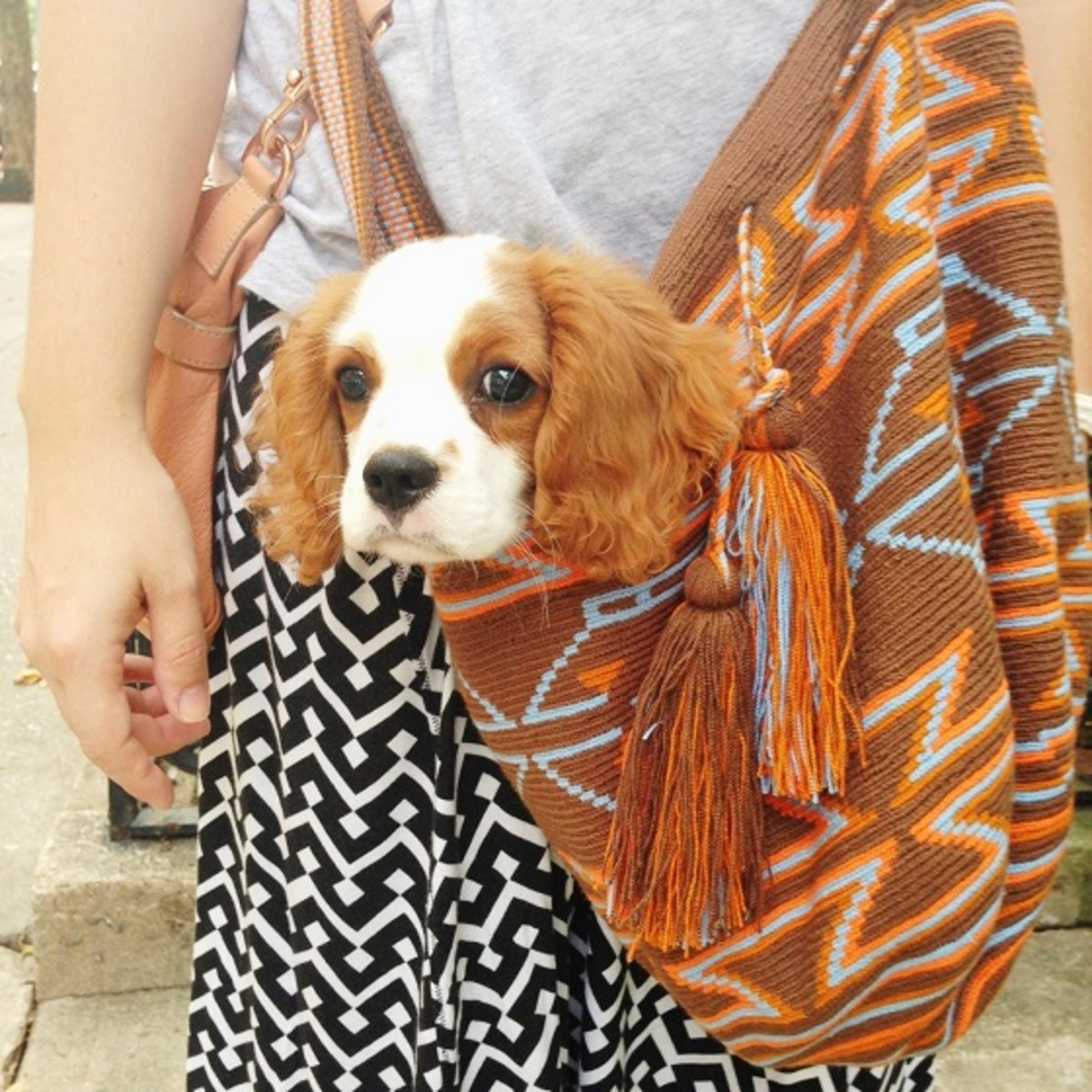 Puppy in a Miss Mochila Bag