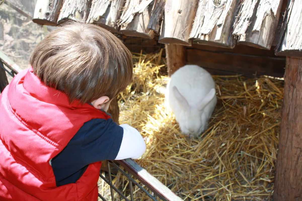 A Visit with the Easter Bunny, Central Park Children's Zoo