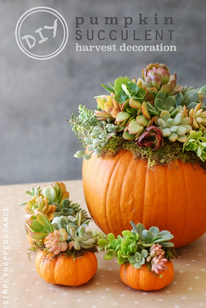 pumpkin-succulents